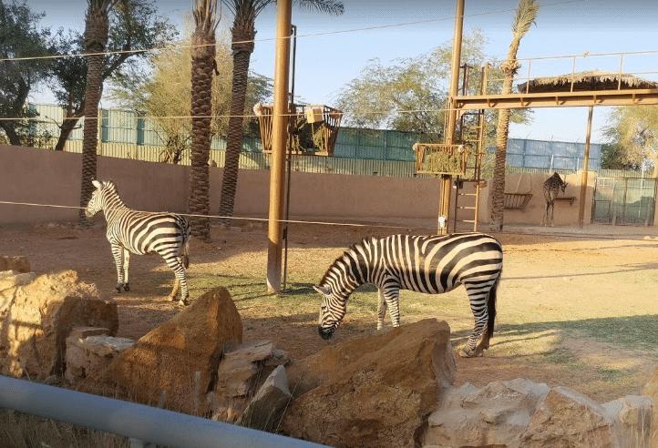 حديقة حيوانات الملز افضل حدائق لعام 2021 وجهات